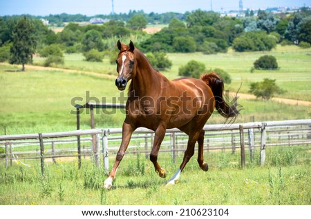 a horse running towards a fence - stock photo