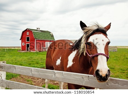 A horse standing in front of a red barn - stock photo