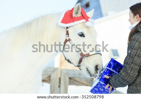 A horse with santa hat outside in winter season - stock photo