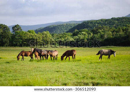 A horses in a field - stock photo