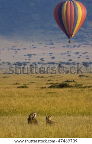 a hot air balloon flies over masai mara with lions resting in the grass - stock photo