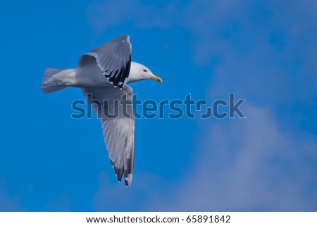 a hovering seagull above the sea in the sky