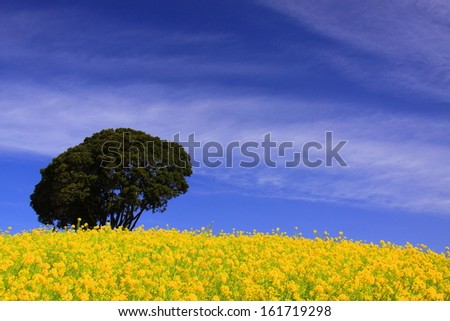 A huge tree surrounded by yellow flowers under a clear blue sky. - stock photo
