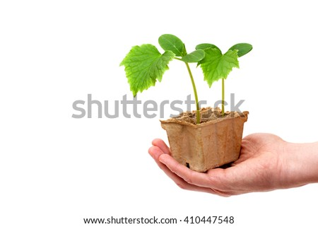 A human hand is holding cardboard box with cucumber plants - stock photo