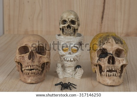 a human skull isolated against a white background