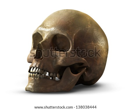 a human skull on a white background - stock photo