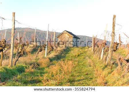 A hut in a vineyard in the winter time.