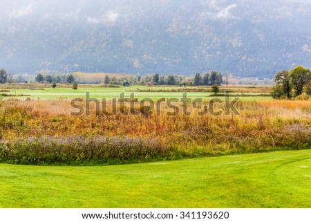 a idyllic meadow or golf course in a sunny beautiful morning - stock photo