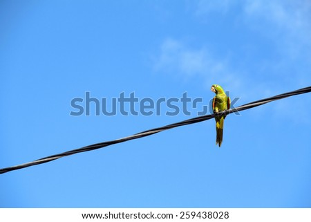 A isolated parrot on the wire - stock photo