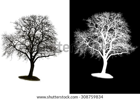 A isolated winter tree with alpha mask