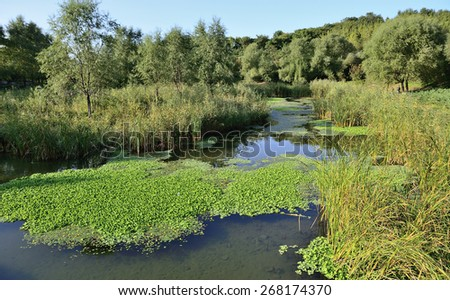 A Japanese garden with a pond - stock photo