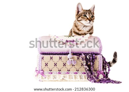 a jewel box and a cute kitten isolated over a white background - stock photo