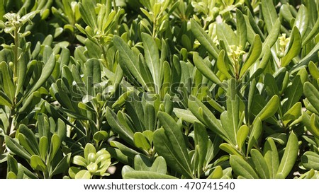 A juicy green park plant background on a sunny day