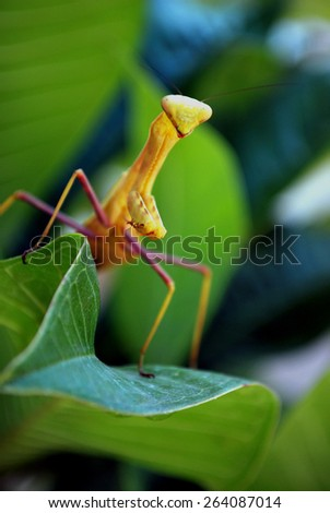A jumping grasshopper, LA Zoo, California - stock photo
