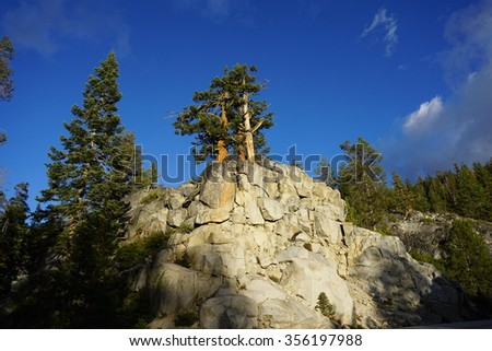 A juniper tree grows from a rocky outcrop in Yosemite National Park, USA - Juniperus occidentalis - stock photo