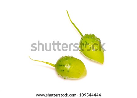 a kind of chinese herbal medicine stone fruit on a white background
