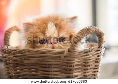 A kitten in wicker basket.