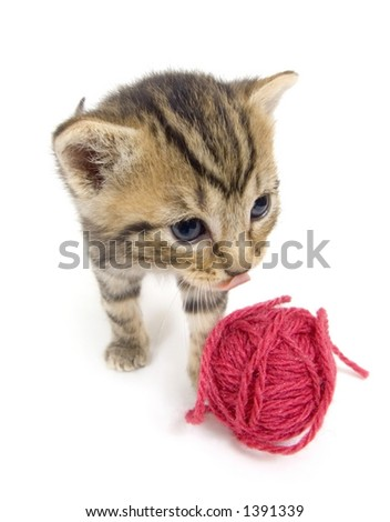 A kitten investigates a ball of red yarn on a white background. This kitten is being raised on a farm in central Illinois. - stock photo