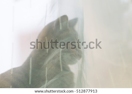 A kitten or young cat looking through the light curtain. Portrait of a cat.