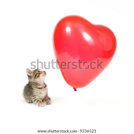 A kitten plays with a red heart shaped Valentines Day Balloon on white background
