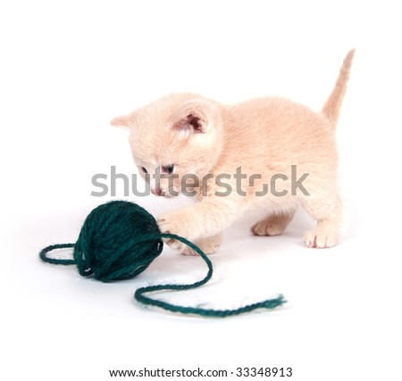 A kitten plays with ball of green yarn on white background