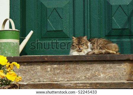 A kitten resting in the doorway. - stock photo