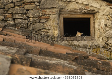 A kitten sleeps in an open window on a terracotta tiled roof in Tuscany, Italy. - stock photo