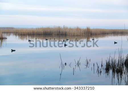 a lake with reeds at dawn in the autumn - stock photo