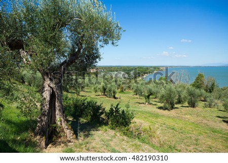a landscape in Italy with olive trees in front of a lake