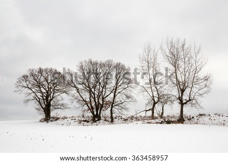 a landscape in winter with snow and trees