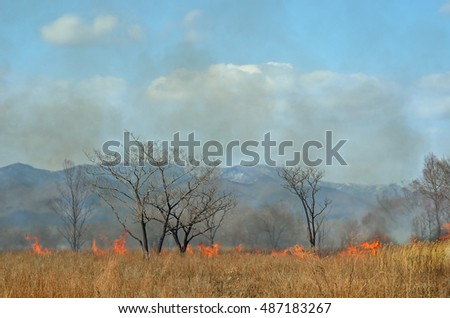 A landscape on brushfire: flame, smoke, ash, trees and sky.