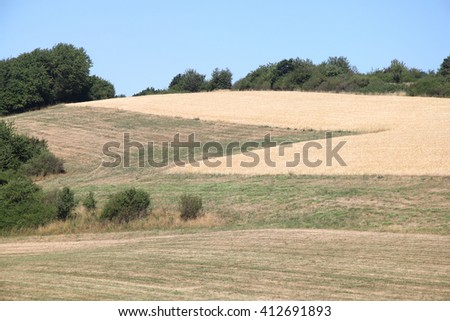 A landscape with wheat fields and forest