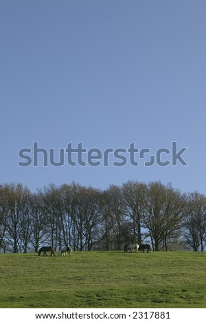 A landscape with wild horses in the distance on the horizon, plenty of blue sky for copy space