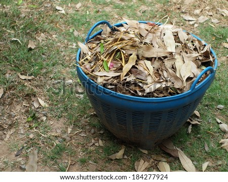 a large blue plastic bin trash container full of brown dried leaves falling collected from the green grass floor in the backyard.  - stock photo