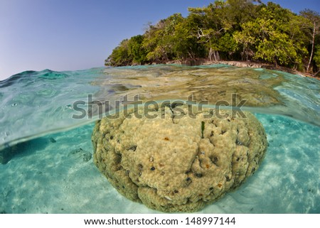 A large boulder coral (Porites lutea) grows in shallow water near a tropical island in the Solomon Islands.  This area is found within the Coral Triangle and is high biological diversity. - stock photo