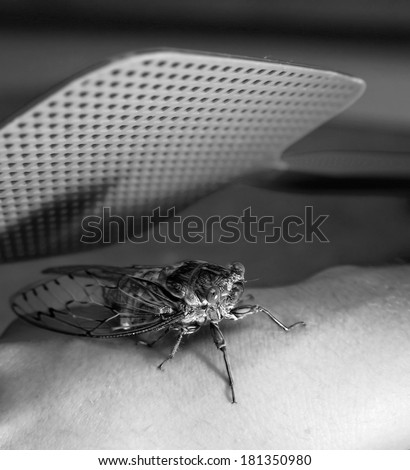 A large bug (Cicada) underneath a large fly swatter in black and white - stock photo
