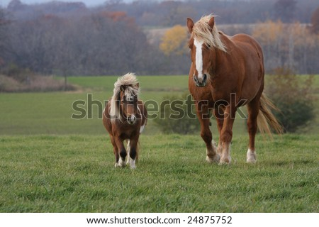 A large Clydesdale horse and a small Shetland pony running across a pasture together in the autumn.