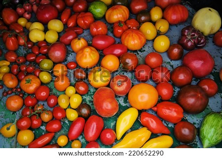 A large collection of various tomato cultivars