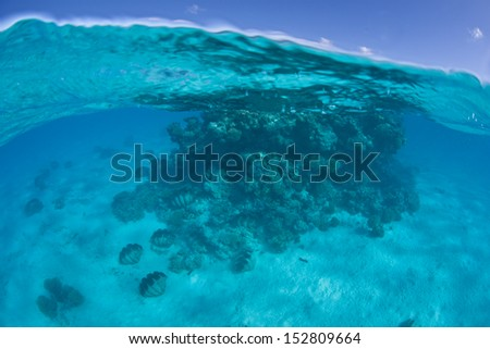 A large coral bommie, surrounded by giant clams, grows on a shallow sand flat near the south Pacific island of Aitutake in the Cook Islands. - stock photo