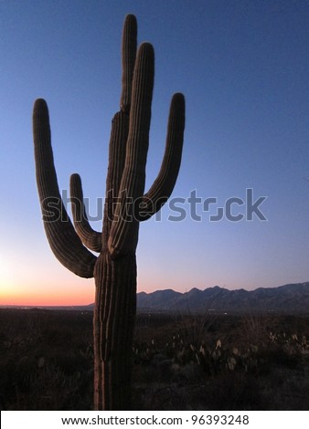 A large desert cactus silhouetted against the orange glow of a mountain sunset at twilight. - stock photo
