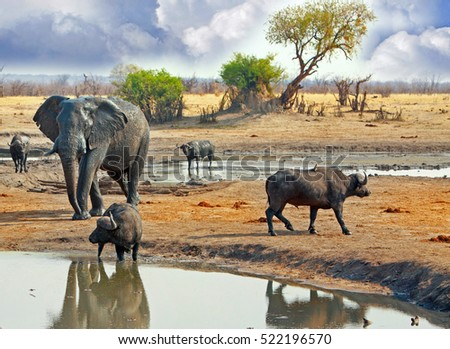 stock-photo-a-large-elephant-stands-behi