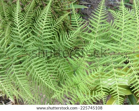 A large fern with a lot of leaves. - stock photo