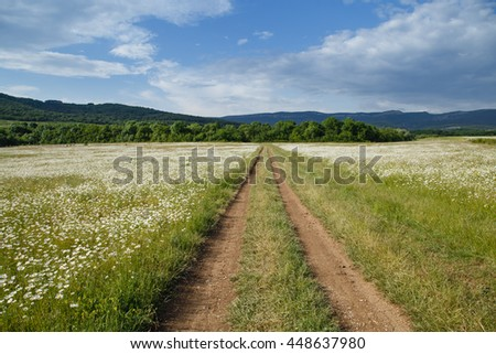 a large field of daisies with country road. spring or summer. The concept of purity and freshness, health and joy