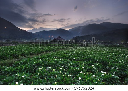 A large field of flowers with the mountains in the distance. - stock photo