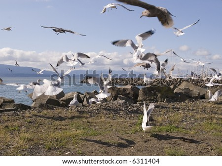 A large flock of seagulls hovering around a rocky coast
