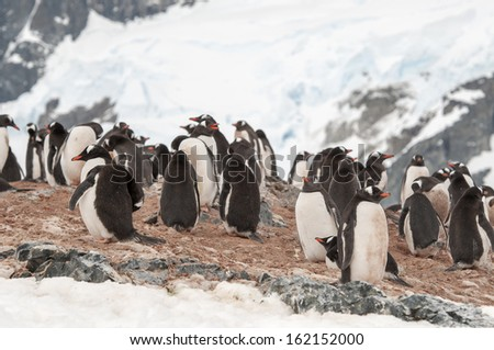 a large group of penguins having fun in the snowy hills of the Antarctic - stock photo