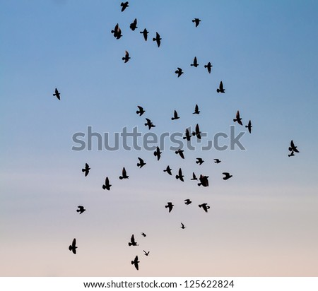 A large group of pigeons against the sky. - stock photo