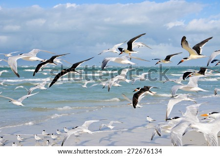 A Large Group of Seagulls taking Flight from the Beach  - stock photo