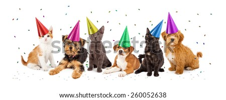 A large group of young kittens and puppies together wearing party hats with confetti falling - stock photo