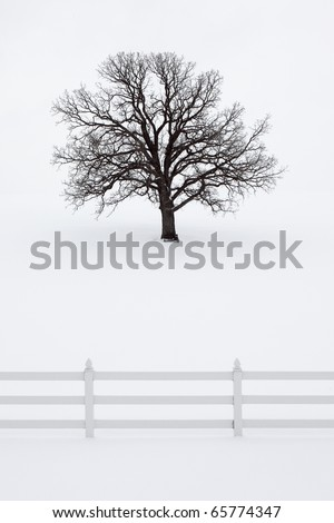 A large oak tree without leaves stands tall in a snowy field behind a fence in idyllic holiday scene. - stock photo